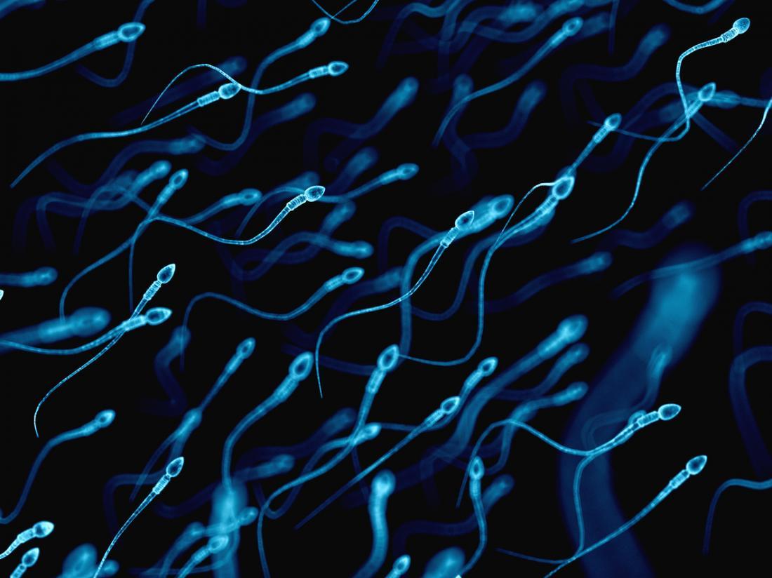 diagramme de sperme