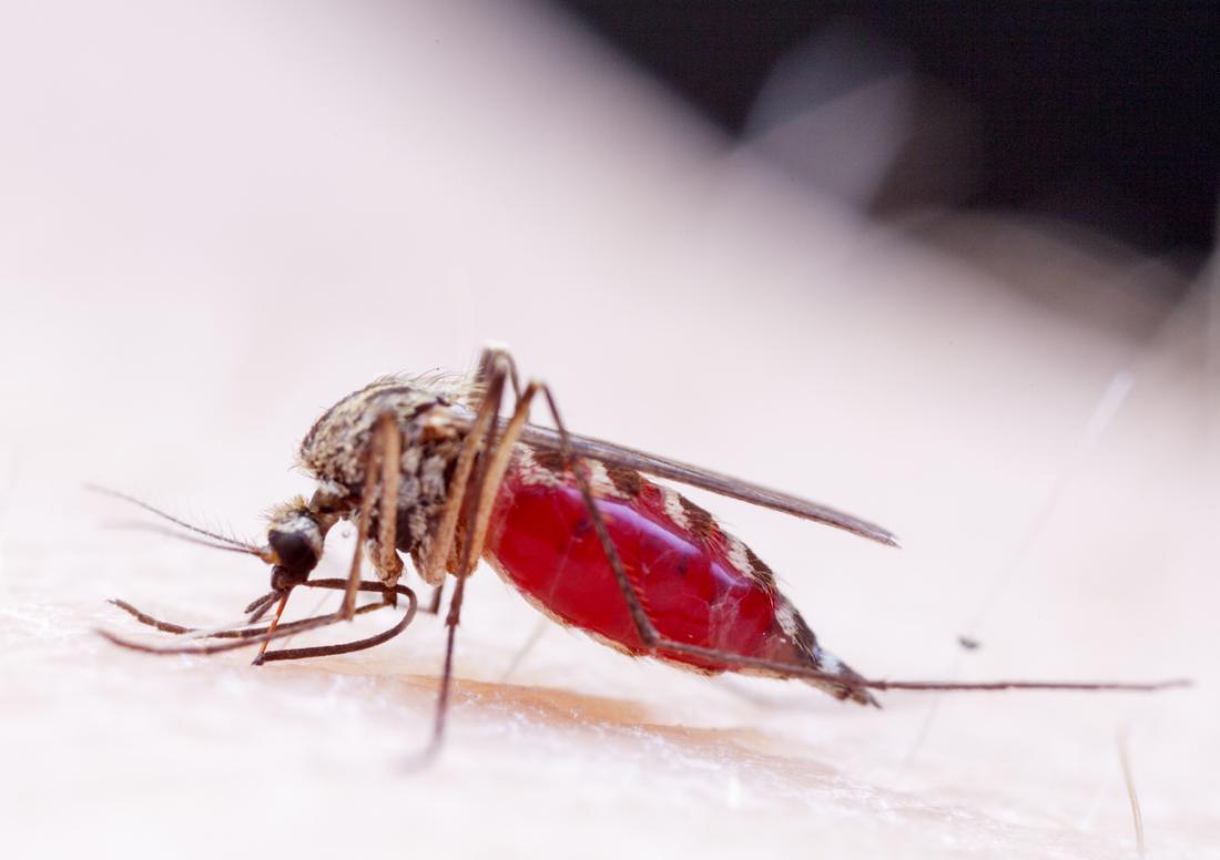 Зика е на комар