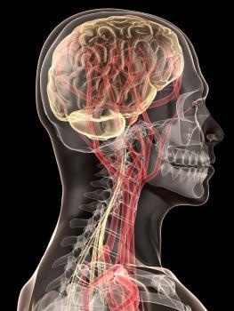 Ilustração do cérebro e da medula espinhal