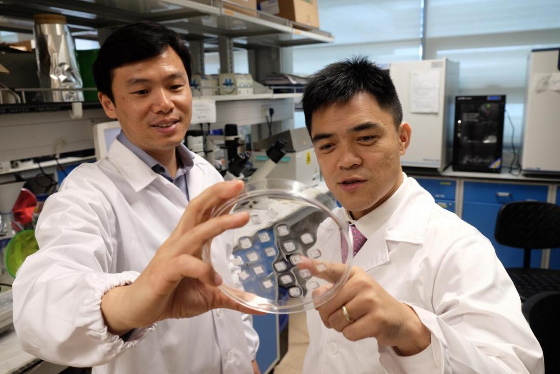 scientifiques tenant un gros patch de peau brunissement
