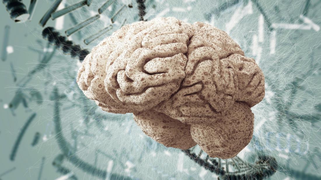 Cerveau et ADN brin