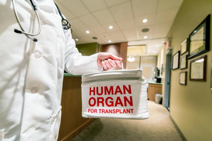 Doktor, der Behälter mit menschlichem Organ hält