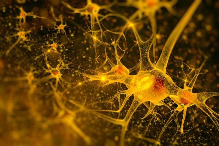 [Uma ilustração de neurônios]