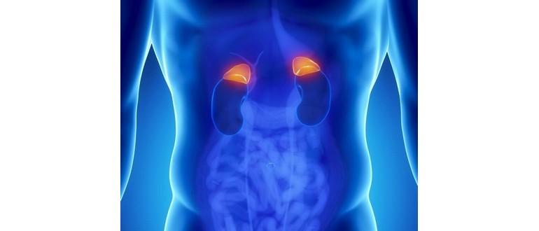 Was ist über Phäochromozytom zu wissen? - DeMedBook